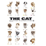 The Cat collection Постер