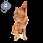 Турецкая ангораФотографии породы кошек Турецкая ангора