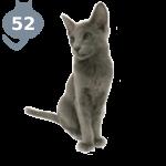 Все выпуски журналов The Cat collection Белая Американская Короткошерстная Кошка
